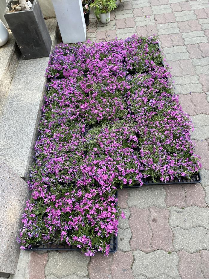 04.15 김복현 -꽃 120개.jpg